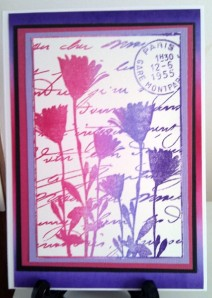 Darkroom Door Pressed Flowers Collage