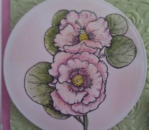 Flourishes Bloomin' Aussie Florals