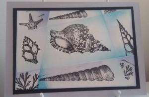 Darkroom Door Seashells, Seaside Volume 2